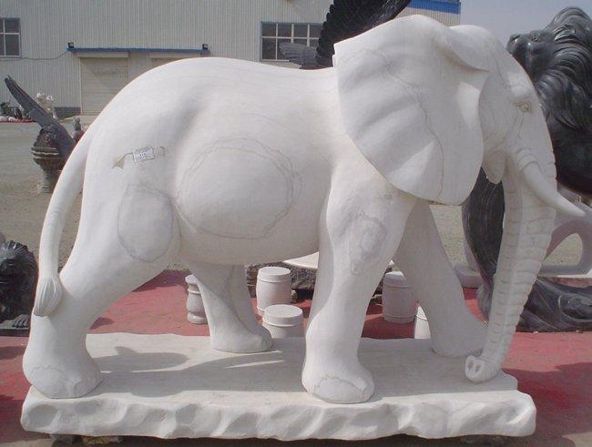 大象 (15)