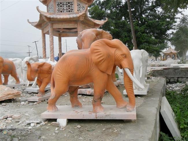 大象 (10)